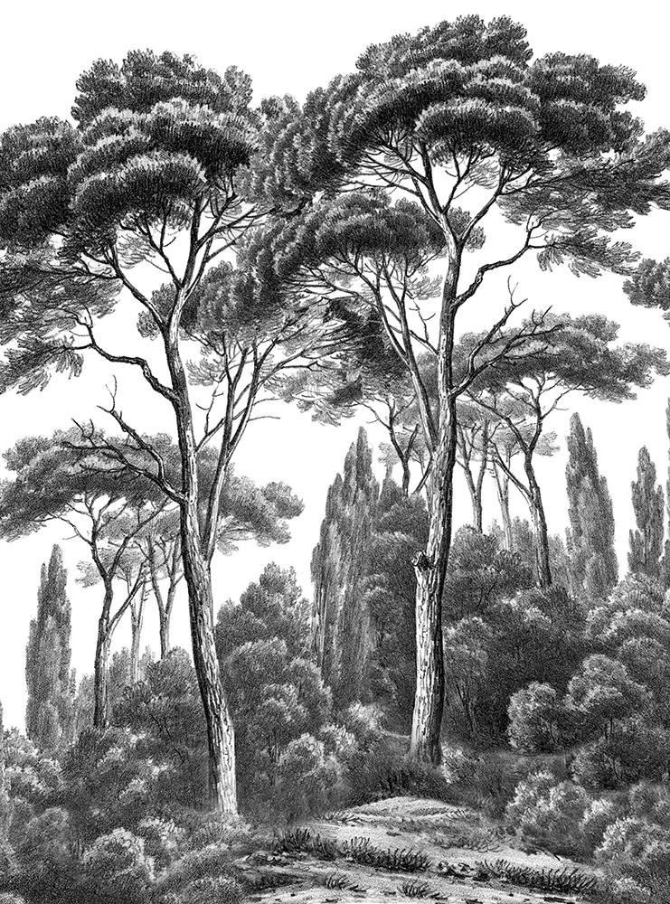 Papier Peint Panoramique Ananbo Pins Et Cypres Noir Et Blanc