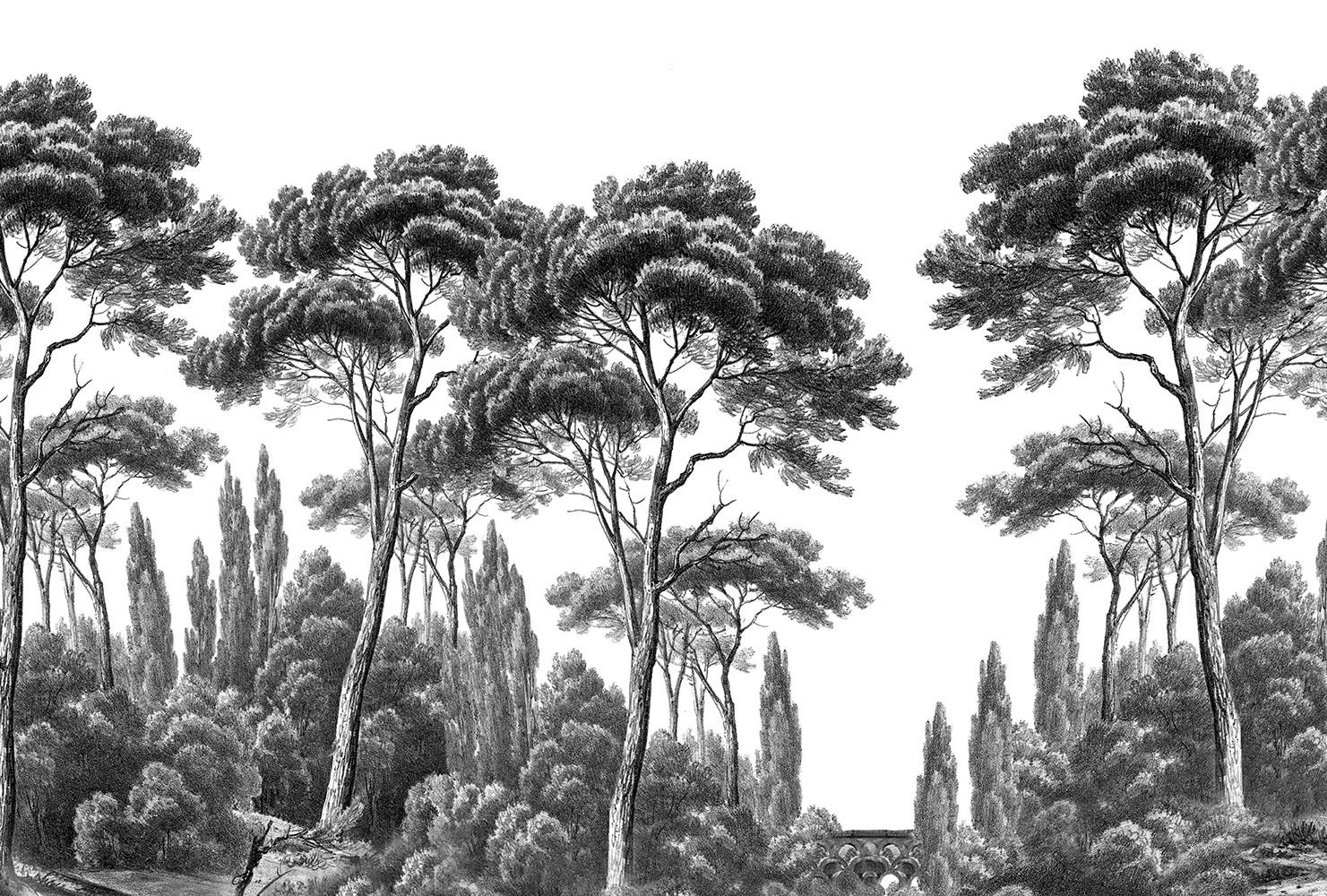 Papier Peint Panoramique Ananbô Pins Et Cyprès Noir Et Blanc