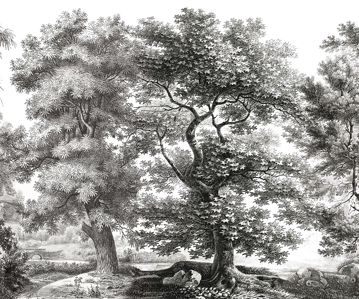 Papier Peint Panoramique Noir Et Blanc papier peint panoramique ananbô sous-bois noir et blanc
